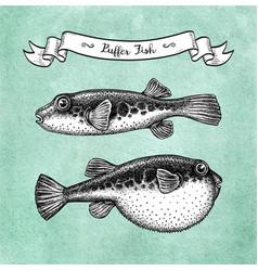 Ink sketch fugu fish vector