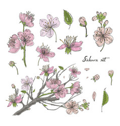 realistic sakura hand drawn set with buds flowers vector image