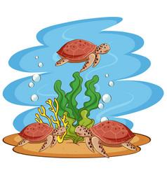 sea turtles swimming in ocean vector image