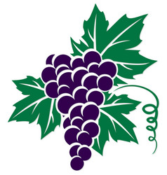 Symbol of grapes vector