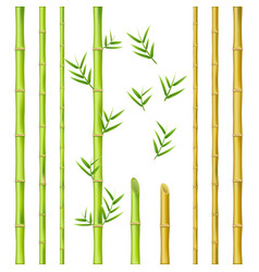 bamboo stems design natural green oriental vector image