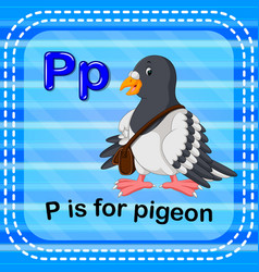 flashcard letter p is for pigeon vector image