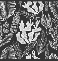 Seaweed seamless pattern hand drawn seaweeds on vector