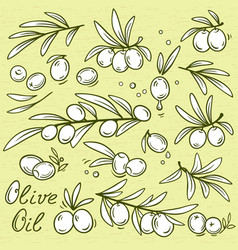 Set of isolated graphic olives vector