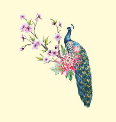 watercolor peacock with flowers vector image