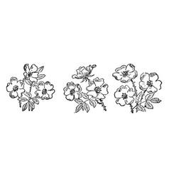 Nine flowers vintage vector