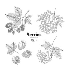 set of hand drawn berries isolated on white vector image