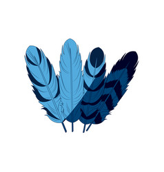 blue differents feather free spirit rustic vector image