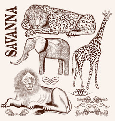 collection of hand drawn savanna animals vector image
