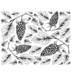 Hand drawn wallpaper of loganberry on white backgr vector
