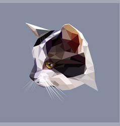 low poly design polygonal color cat vector image