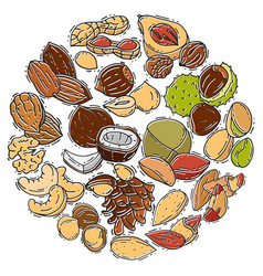 Nuts and seeds collection circle vector