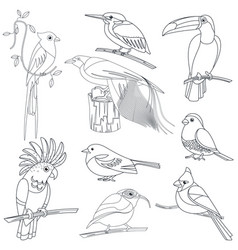 set of outline line stroke tropical exotic vector image