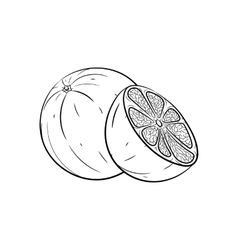 Hand drawn orange sketches vector image