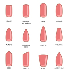 Set of different shapes of nails on white Nail vector image vector image
