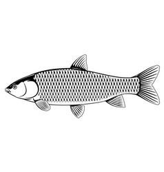 Grass carp black and white vector