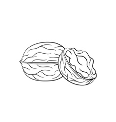 Hand drawn walnut sketches vector