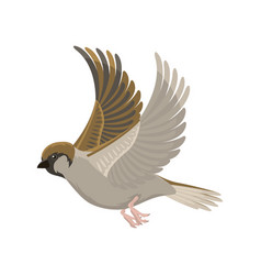 Sparrow flying bird vector