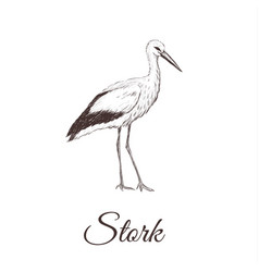 Stork is a sketch drawing vector