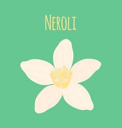 neroli flower oil plant essential cosmetics vector image vector image