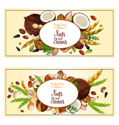 banners of nuts and fruit seeds vector image