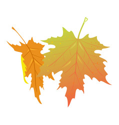 Falling yellow and orange leaves maple tree vector