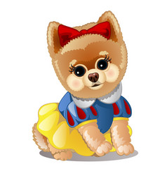 little fluffy dog in clothes vector image