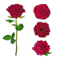 Red rose blooms set with branch of summer flower vector