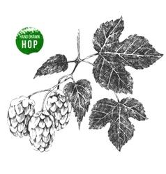 hand drawn hop brunch vector image vector image