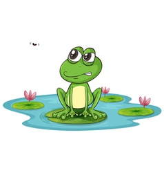 A frog and water vector