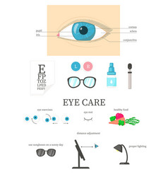human eye diagram eye care flat isolated vector image