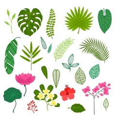 Set of stylized tropical plants leaves and flowers vector image vector image