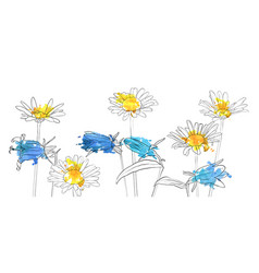 drawing poppy flowers vector image