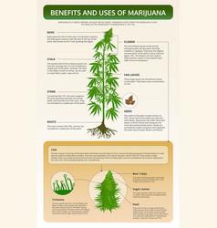 Benefits and uses marijuana vertical textbook vector