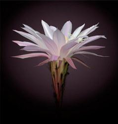Cactus flower vector