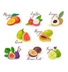 Exotic fruits assortment mango lychee longan vector