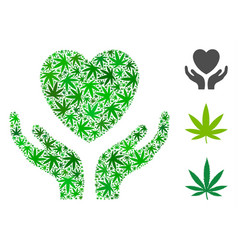 love heart care hands composition of cannabis vector image