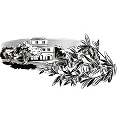 olives on a branch and a mediterranean farmhouse vector image