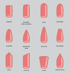 Set of different shapes of nails on gray Nail vector