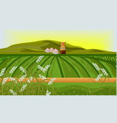 Rice fields farm landscape sunshine vector