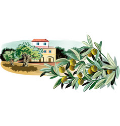 olives on a branch and a mediterranean farmhouse vector image vector image