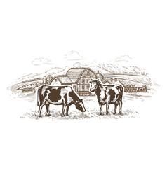 Dairy farm cows graze in meadow rural vector