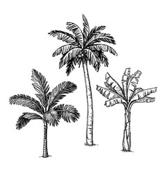 Ink sketch palm trees vector