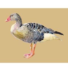 Watercolor painting of bird goose vector