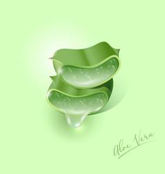 Aloe vera green plant cut pieces leaves juicy vector