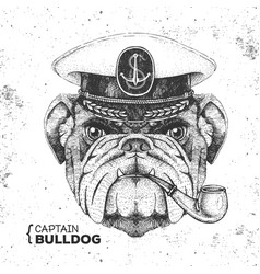 Hipster animal bulldog captains cap and pipe vector