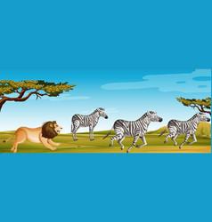 Scene with lion hunting zebra in green field vector