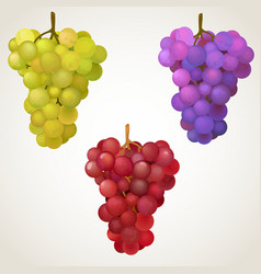 Three cluster grape vector