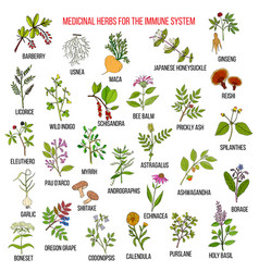 best medicinal herbs for the immune system vector image