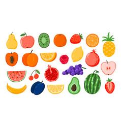 set fruits natural tropical summer fruits vector image